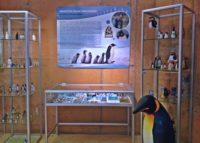 Magiczny świat pingwinów