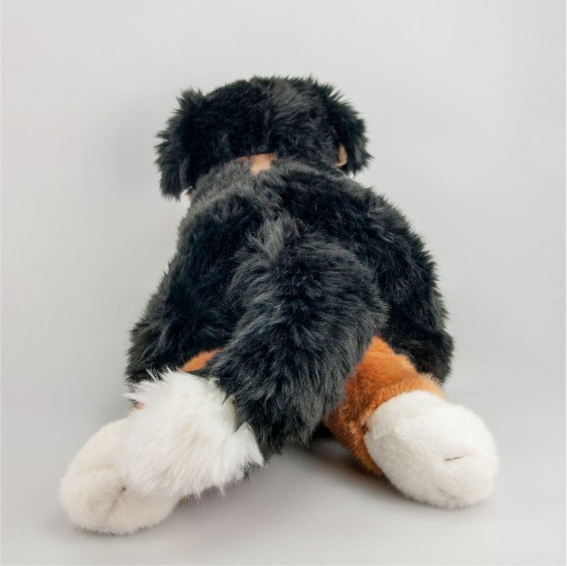 Berneński pies pasterski 55 cm