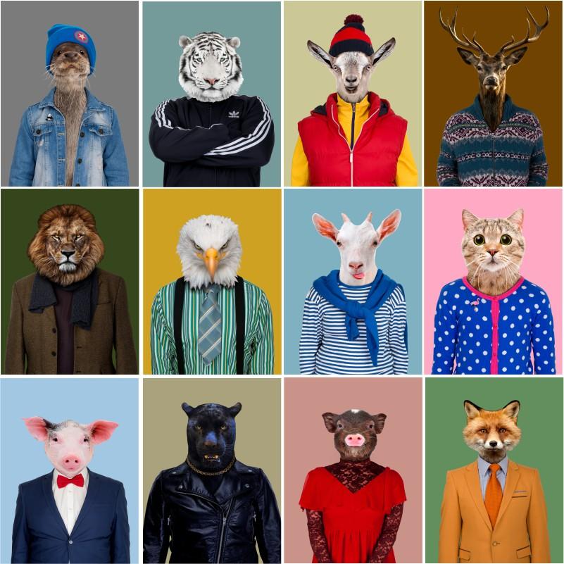 Plakaty zwierząt