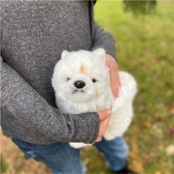 Pies chow chow 31 cm